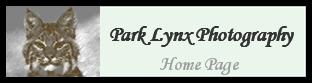 Park Lynx Photography