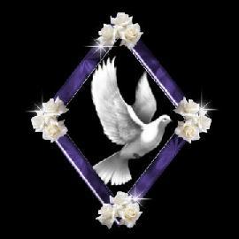 rose_dove_white_rose.jpg