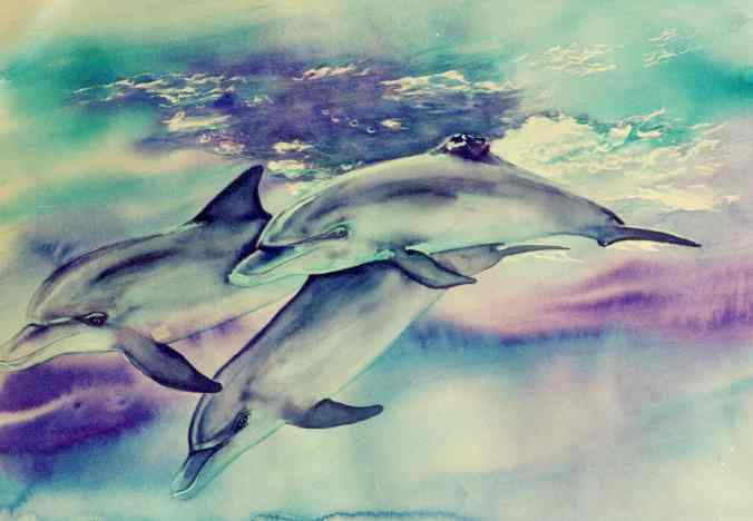 index of levans2424 dolphins