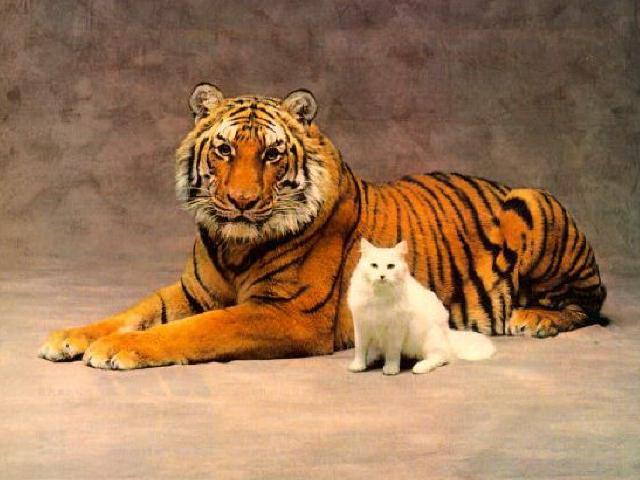 http://d21c.com/lexxee/pics3/Cats.jpg